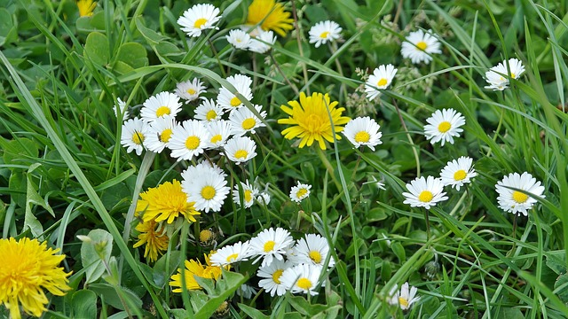 Daisies and weeds