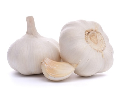 garlic is not for guinea pigs to eat