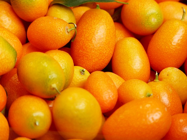 kumquat for guinea pigs