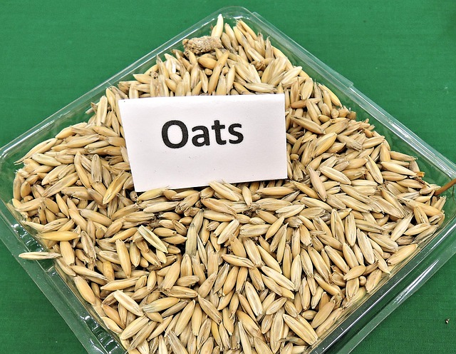 oats for guinea pigs