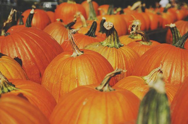 Pumpkin for guinea pigs